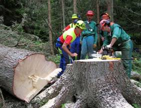 Vivaio Forestale Abruzzo : Corsi per boscaioli pat foreste demaniali
